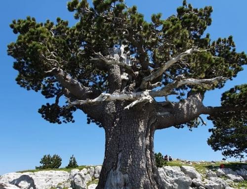"""Escursioni """"classiche"""" nel Parco nazionale del Pollino … assolutamente da non perdere!"""