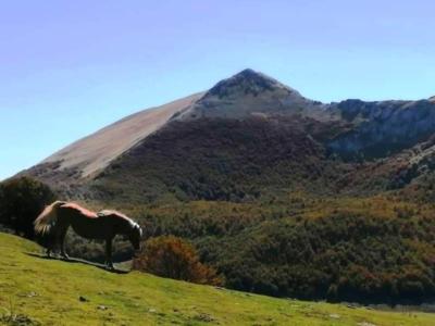 Cavallo ai piani del Pollino