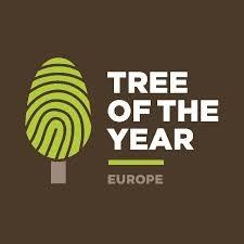 """Il Platano di Curinga in concorso al """"Tree of the Year"""" 2021"""